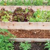 Start your own vegetable garden: Six Easy Steps