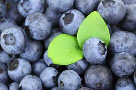 blueberries_photo