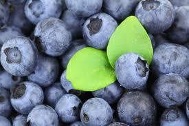 blueberries_photo
