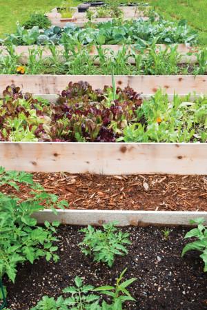 Start Your Own Vegetable Garden Six Easy Steps The