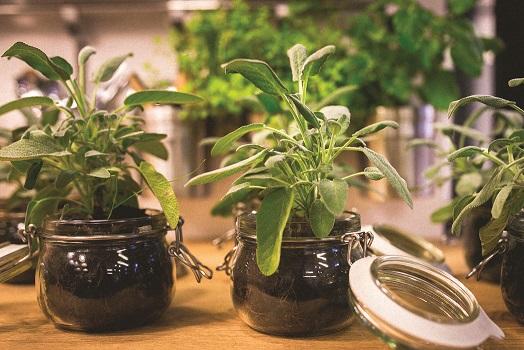 Indoor Gardening Plants Indoor gardening for a year round harvest the sunriseguide herb plants in jars workwithnaturefo