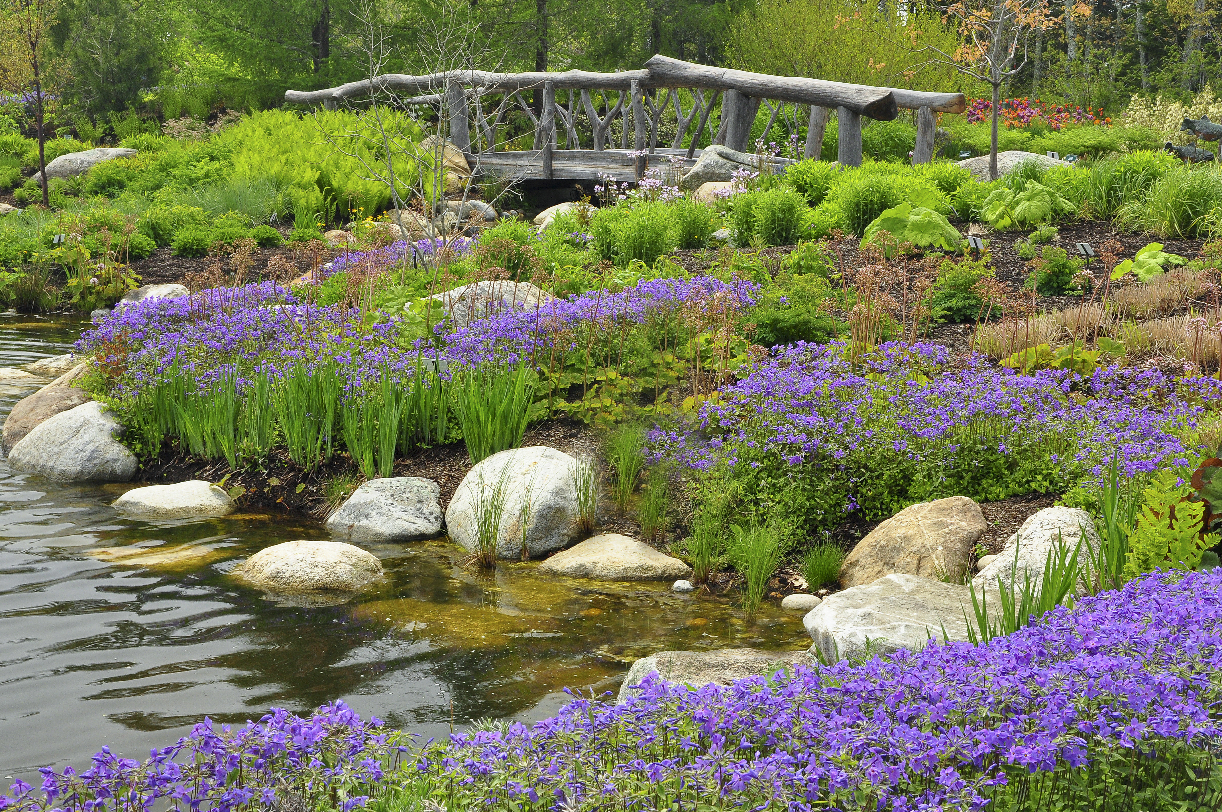 Sherwood Purple Phlox In The Lerner Garden Of The Five Senses At Coastal Maine  Botanical Gardens In Boothbay. Photo: CMBG